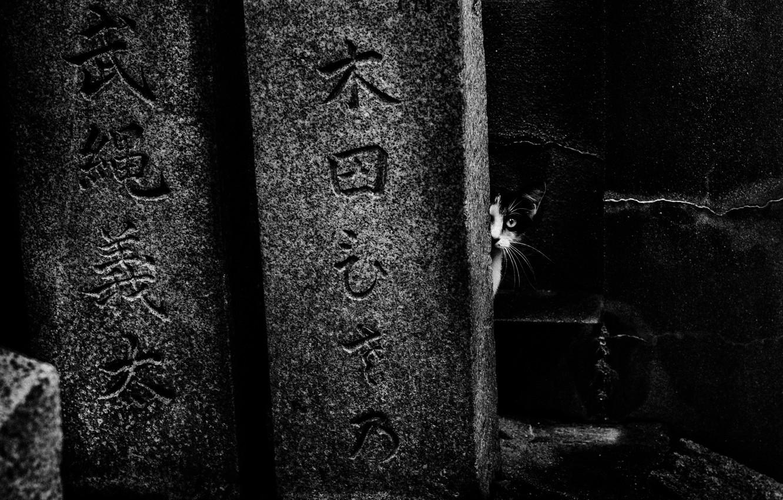 Фото обои кот, иероглифы, cat, hieroglyphs, tomorca