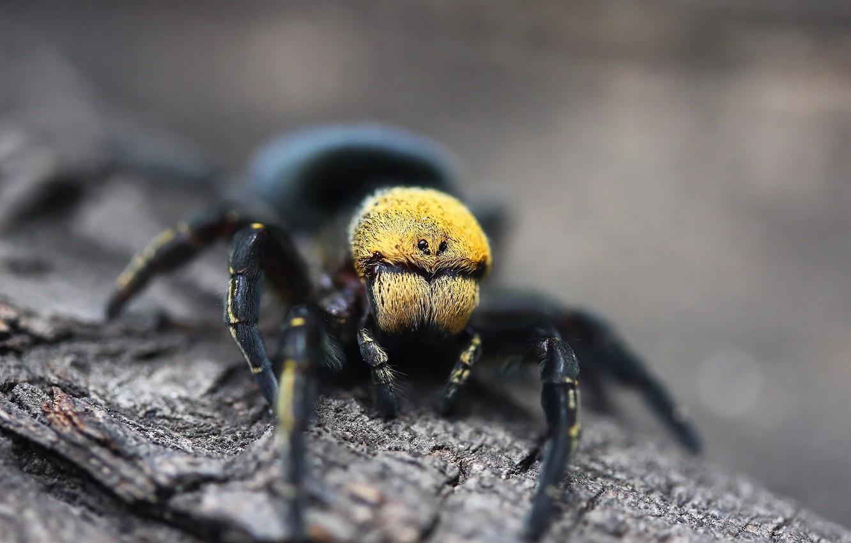 Фото обои фон, дерево, паук, паучок