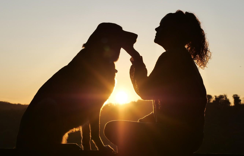 Фото обои закат, Девушка, собака
