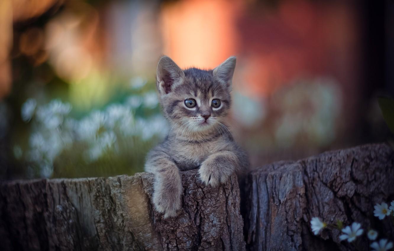 Фото обои лапки, малыш, мордочка, котёнок, боке