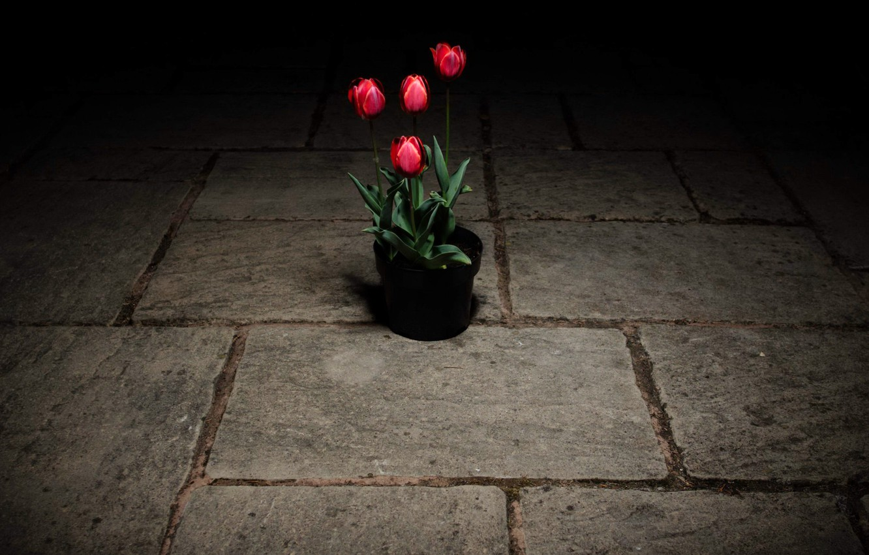Фото обои цветы, улица, тюльпаны