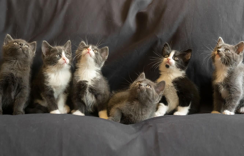 Фото обои котята, kittens, Gert van den Bosch