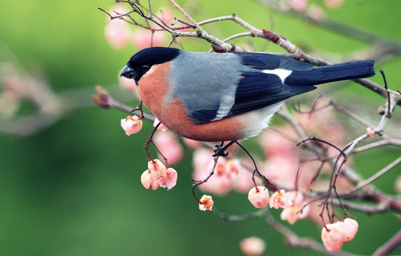 картинки птицы на ветвях здесь режиме