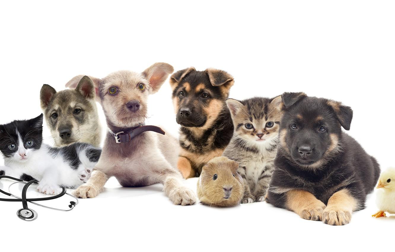 Фото обои собаки, хомяк, щенки, котята, цыпленок