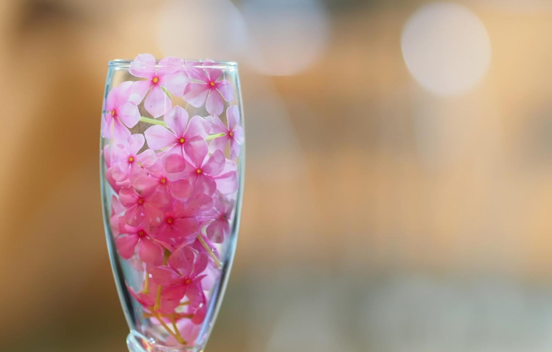 Фото обои цветы, бокал, лепестки