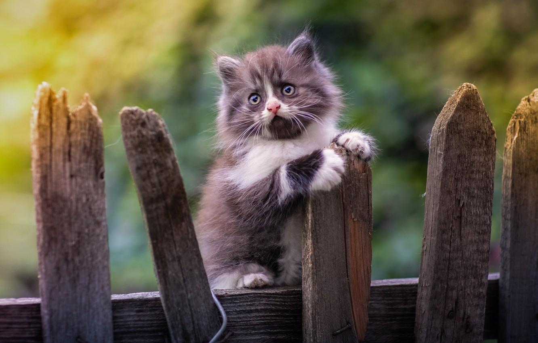 Фото обои забор, малыш, котёнок, боке, Юрий Коротун