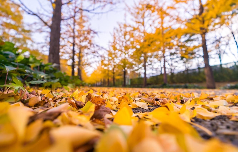 Фото обои осень, лес, листья, деревья, парк, colorful, forest, landscape, park, autumn, leaves, tree, path, fall