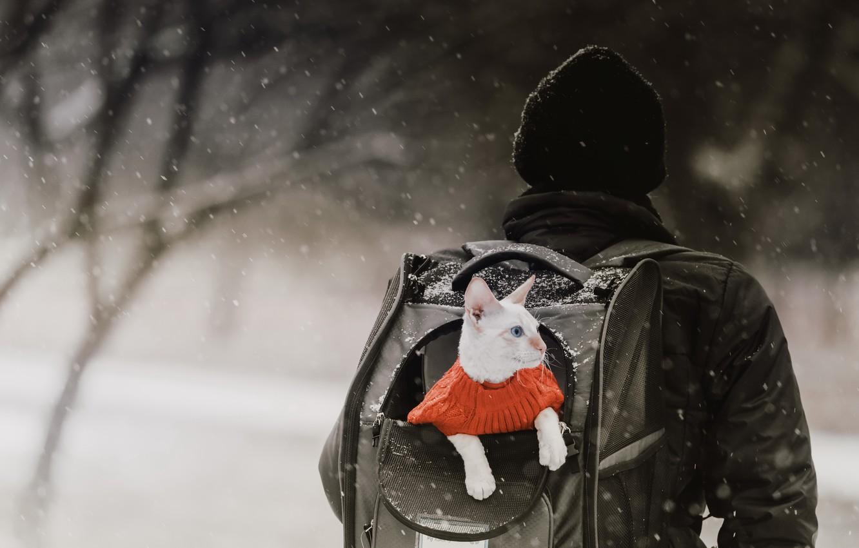 Фото обои зима, кошка, рюкзак