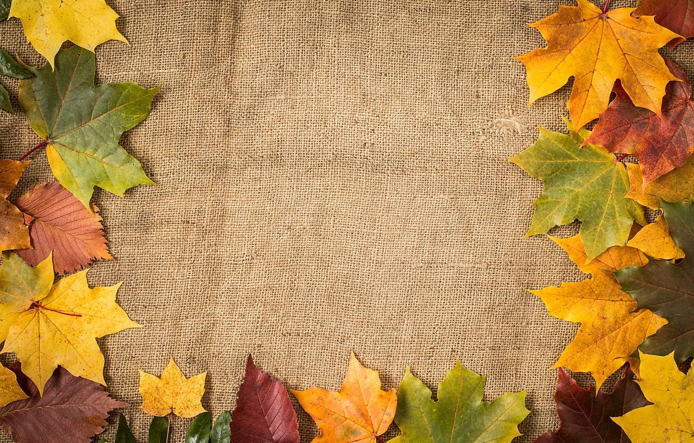 Фото обои осень, листья, фон, colorful, клен, wood, autumn, leaves, maple