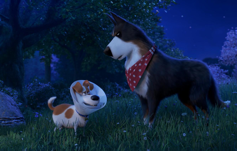 Обои собаки, люпины, цветы, Две собаки, луг. Собаки foto 18