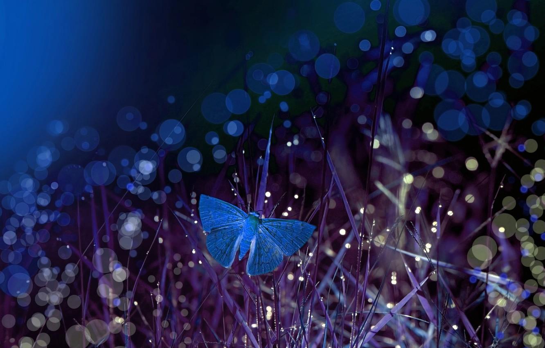 Фото обои трава, макро, ночь, бабочка, боке, Eleonora Di Primo