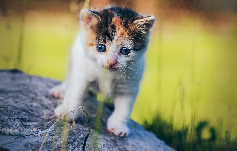 Фото обои пень, размытость, малыш, котёнок