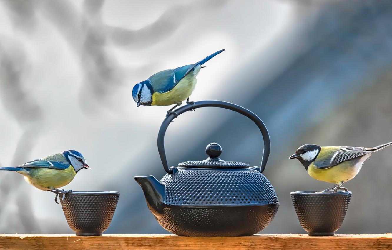 Фото обои птицы, стол, фон, чайник, чашки, посуда, три, доска, птички, трио, синица, синицы, исследователи