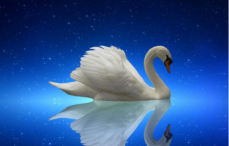 Фото обои swan, nature, night, lake, starry night