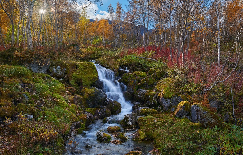 Фото обои осень, деревья, пейзаж, горы, природа, ручей, камни, мох, берёзы, Константин Воронов