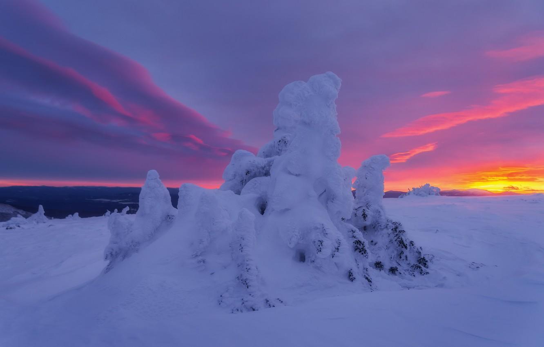 Фото обои зима, снег, деревья, пейзаж, природа, ели, заря