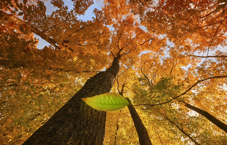 Фото обои осень, лист, дерево, autumn, tree, leaf, Stephen Clough