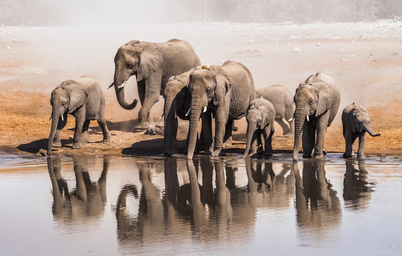 Фото обои water, elephants, shore