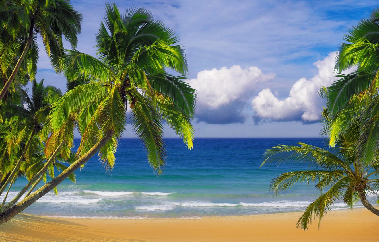 Фото обои песок, пляж, небо, пальмы, океан