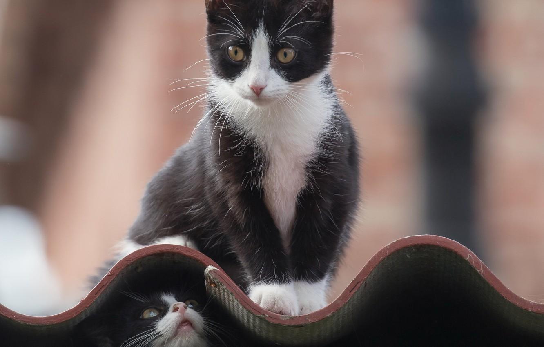 Фото обои мордочка, котята, котёнок, черепица