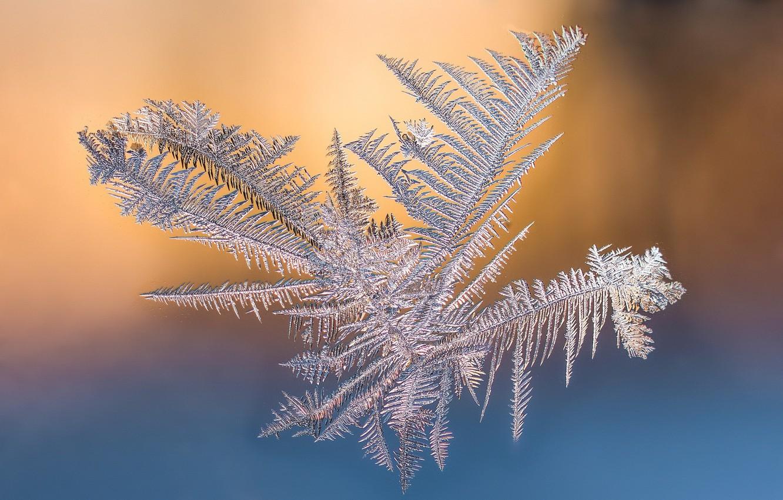 Фото обои иней, фон, снежинка