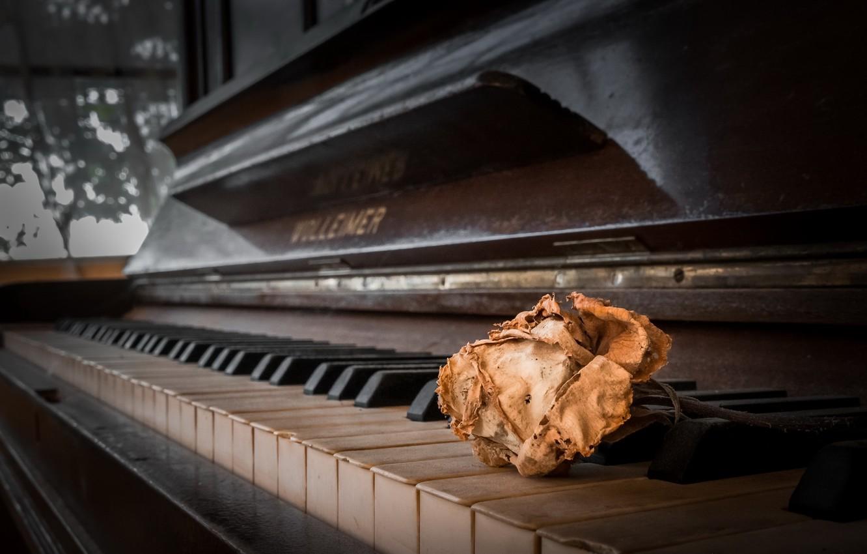 Фото обои музыка, роза, пианино
