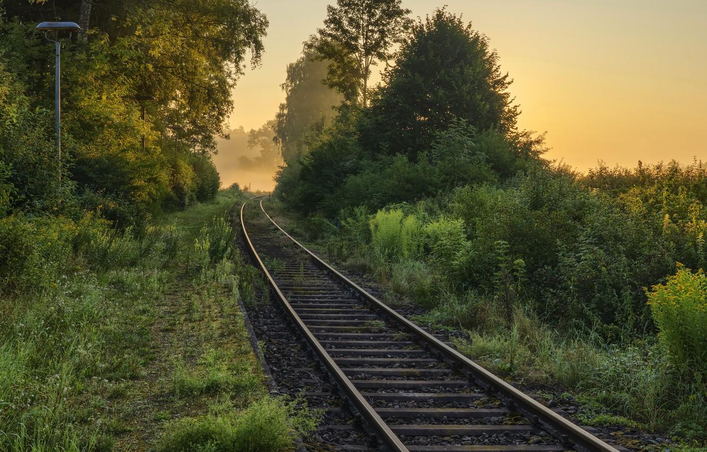 Фото обои лес, природа, железная дорога