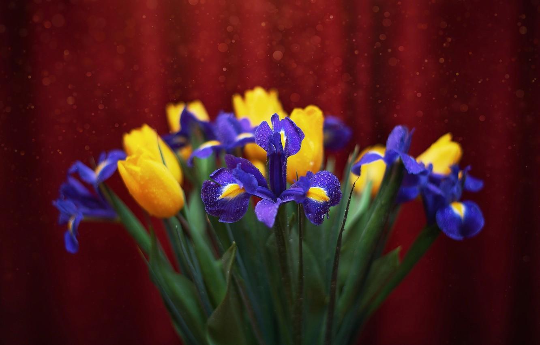 Фото обои вода, капли, макро, цветы, тюльпаны, ирисы, боке