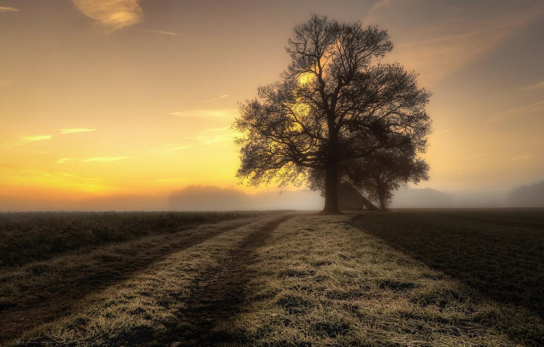 Фото обои дорога, туман, дерево