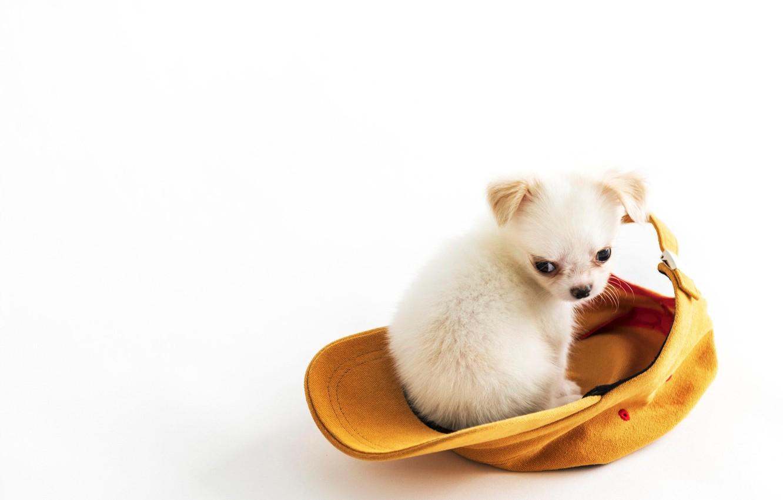 Фото обои фон, малыш, щенок, кепка