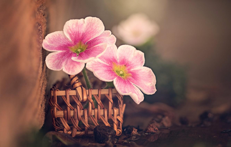 Фото обои макро, цветы, доска, камешки, корзиночка