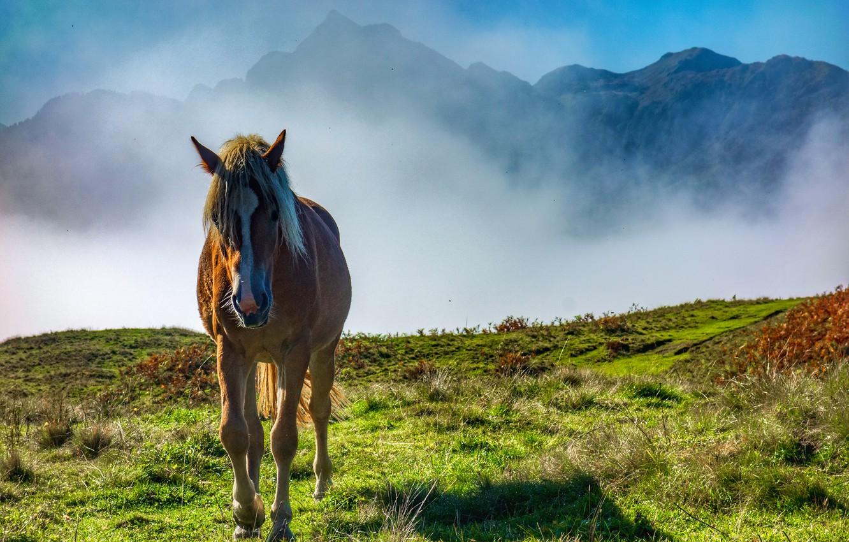 Фото обои горы, туман, лошадь