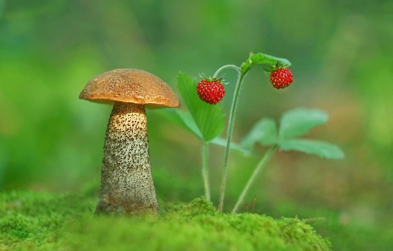 Фото обои фото, гриб, мох, земляника