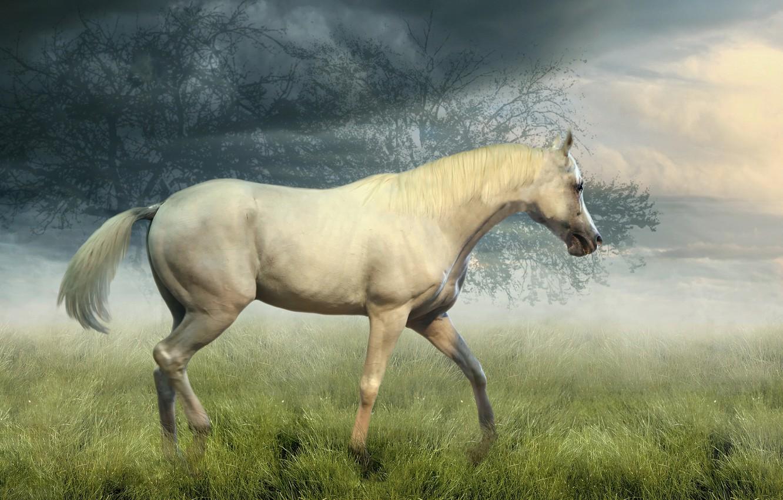 Фото обои поле, белый, небо, трава, взгляд, облака, деревья, природа, туман, конь, коллаж, лошадь, обработка, утро, профиль, ...