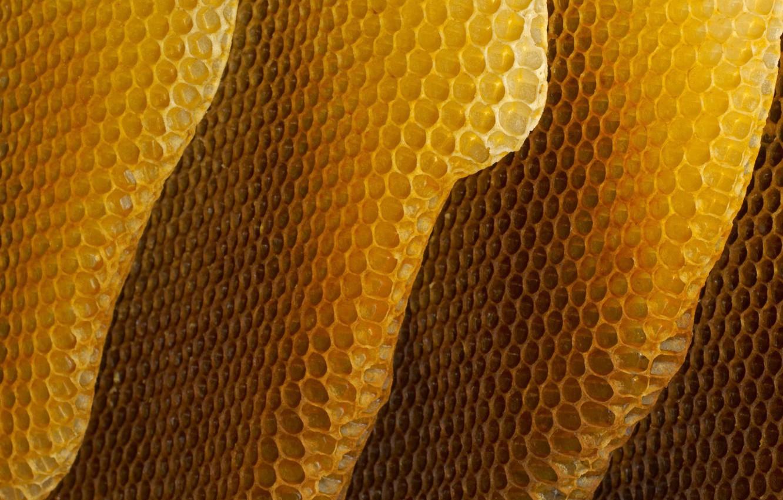 Фото обои соты, мёд, пчёлы