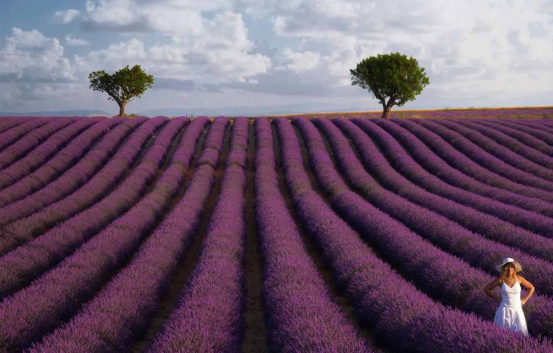 Фото обои поле, лето, девушка, облака, деревья, пейзаж, цветы, поза, настроение, Франция, шляпа, белое платье, ряды, лаванда, ...