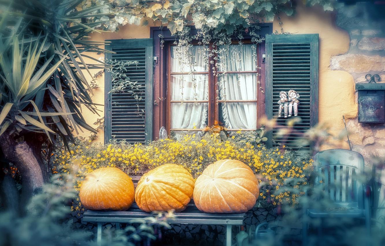 Фото обои осень, цветы, дом, тыквы, дворик, экстерьер