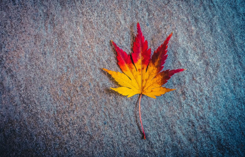 Фото обои осень, поверхность, лист, кленовый