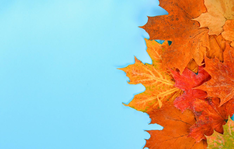 Фото обои осень, листья, фон, colorful, клен, autumn, leaves, осенние, maple