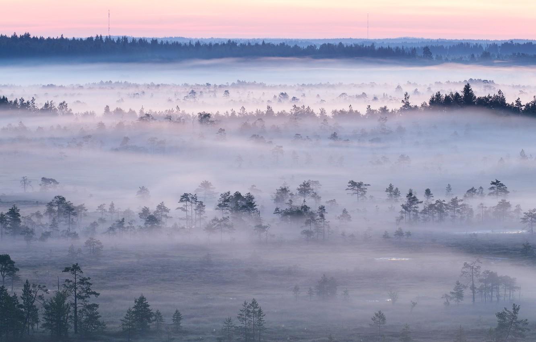 Фото обои лес, закат, туман
