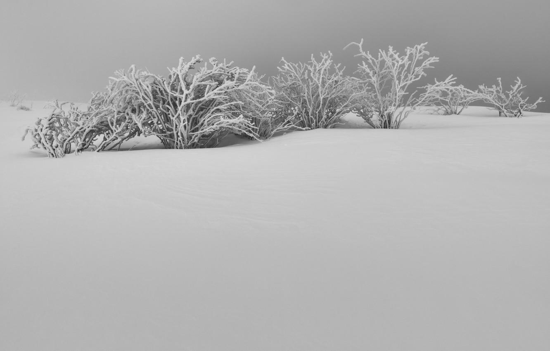 Фото обои зима, снег, кусты