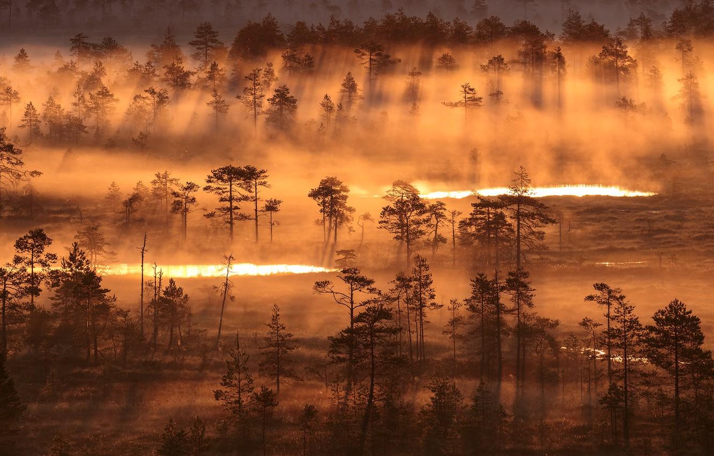 Фото обои свет, природа, туман, утро