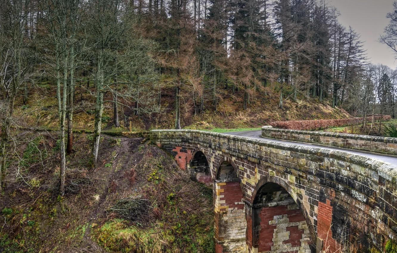 Фото обои дорога, лес, мост