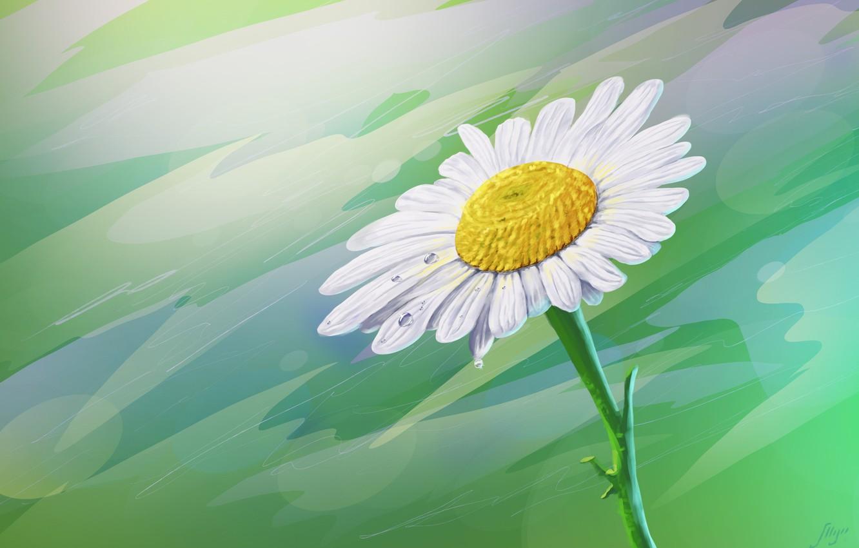 Фото обои цветок, роса, ромашка, арт, капелька, Juri Mukhanov, Сhamomile