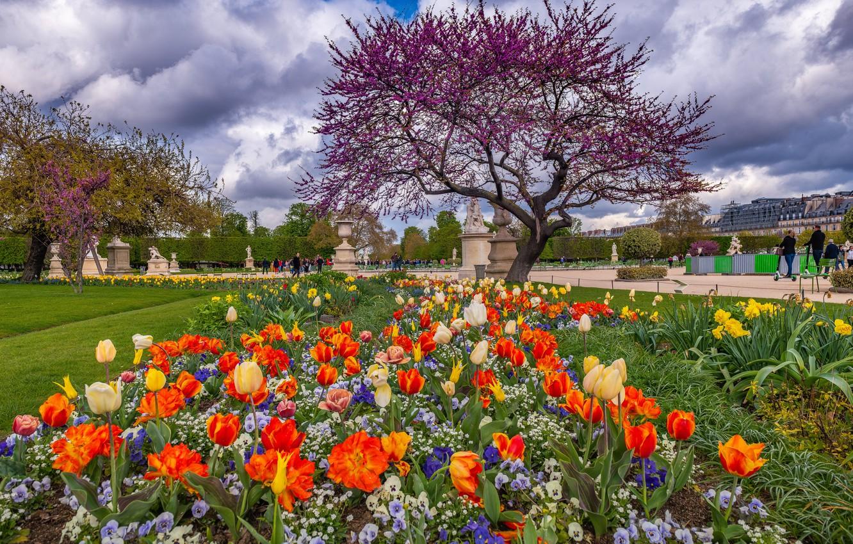 Фото обои Франция, Париж, весна, тюльпаны, Елисейские Поля