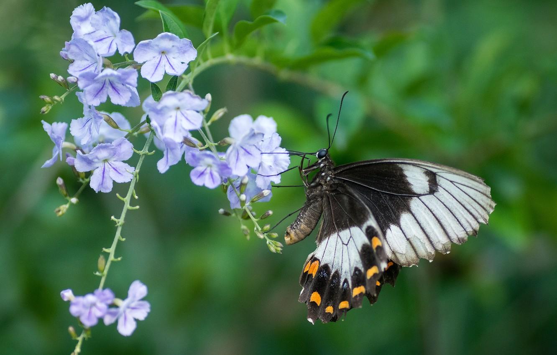 Фото обои цветок, бабочка, крылья