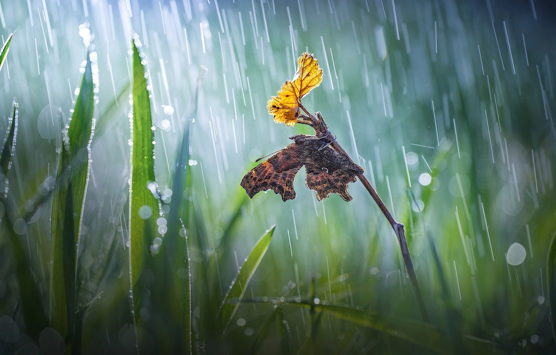 Фото обои трава, макро, природа, лист, веточка, дождь, бабочка, боке, Roberto Aldrovandi