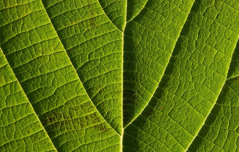Фото обои макро, лист, жилки