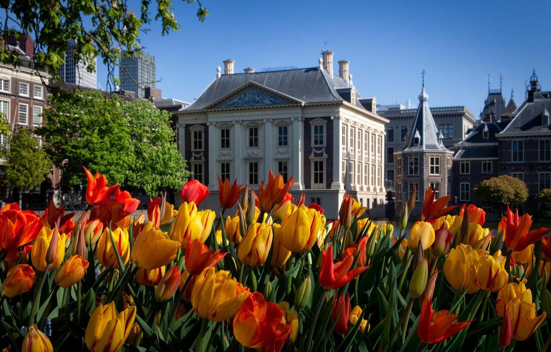 Фото обои дома, весна, тюльпаны, Нидерланды, Гаага