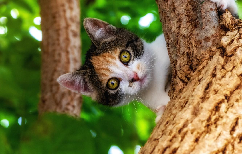 Фото обои природа, дерево, животное, листва, детёныш, котёнок